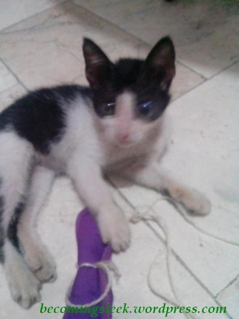 catdog4